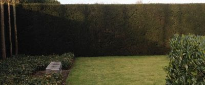Evergreen hedges