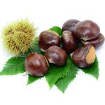sweet chestnut