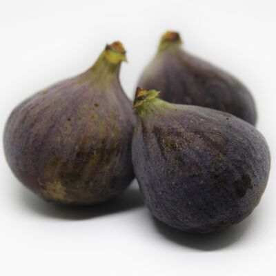common fig, garden fig